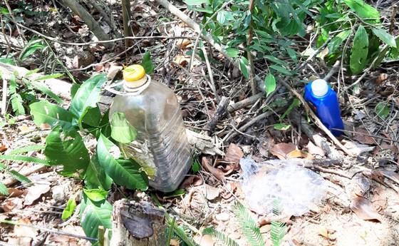 Rừng Thượng Sơn bị tàn phá nghiêm trọng ảnh 14