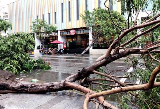 Những thiệt hại ban đầu của cơn bão số 12 ảnh 11