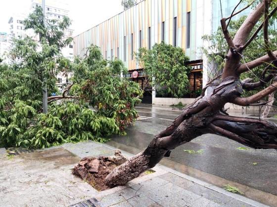 Những thiệt hại ban đầu của cơn bão số 12 ảnh 12