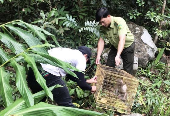 Thả 3 cá thể culi, khỉ mặt đỏ, khỉ mốc về với rừng tự nhiên ảnh 1