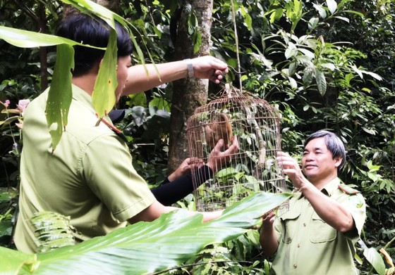 Thả 3 cá thể culi, khỉ mặt đỏ, khỉ mốc về với rừng tự nhiên ảnh 2