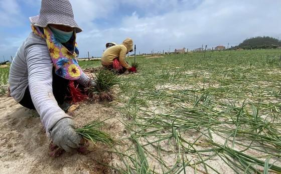 Bão suy yếu, người dân Quảng Ngãi đối diện với ngập lụt ảnh 12