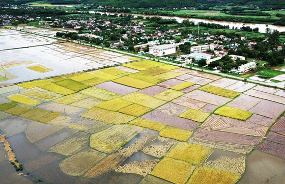 Bão suy yếu, người dân Quảng Ngãi đối diện với ngập lụt ảnh 1