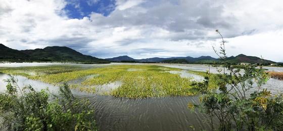 Bão suy yếu, người dân Quảng Ngãi đối diện với ngập lụt ảnh 3