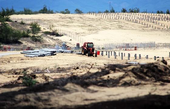 Bình Định chỉ đạo xử lý nghiêm vụ phá 5,26ha rừng phòng hộ ven biển ảnh 1