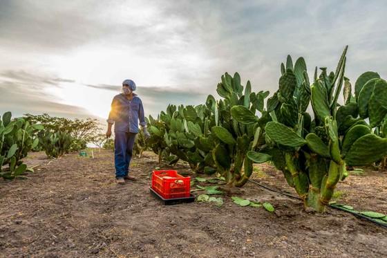 Bên trong nông trại hữu cơ làm nên những sản phẩm Amway chất lượng ảnh 1