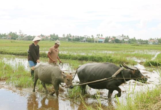 Du lịch làm nông dân ảnh 6