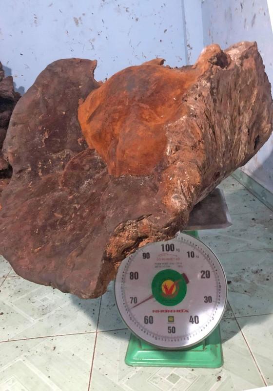 Phát hiện nấm khổng lồ nặng 70 ký nghi là nấm linh chi chân voi  ảnh 1