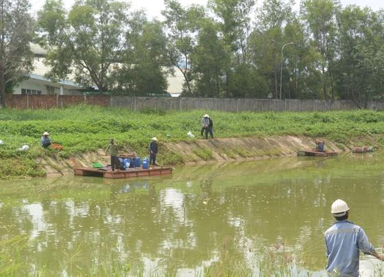 Tái diễn ô nhiễm môi trường xung quanh nhà máy cồn Đại Tân ảnh 2