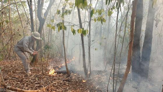 Khẩn trương hoàn chỉnh hồ sơ, khởi tố vụ án cháy rừng tại Quảng Nam ảnh 1