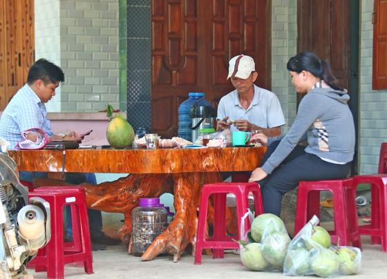 Nông dân Quảng Nam thoát nghèo nhờ bưởi da xanh ảnh 3