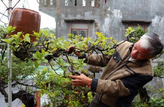 Khám phá vườn bonsai mọc ngược giữa phố ảnh 4
