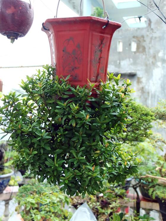 Khám phá vườn bonsai mọc ngược giữa phố ảnh 5