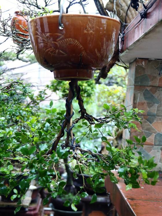 Khám phá vườn bonsai mọc ngược giữa phố ảnh 16