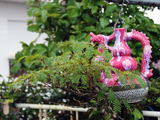 Khám phá vườn bonsai mọc ngược giữa phố ảnh 8