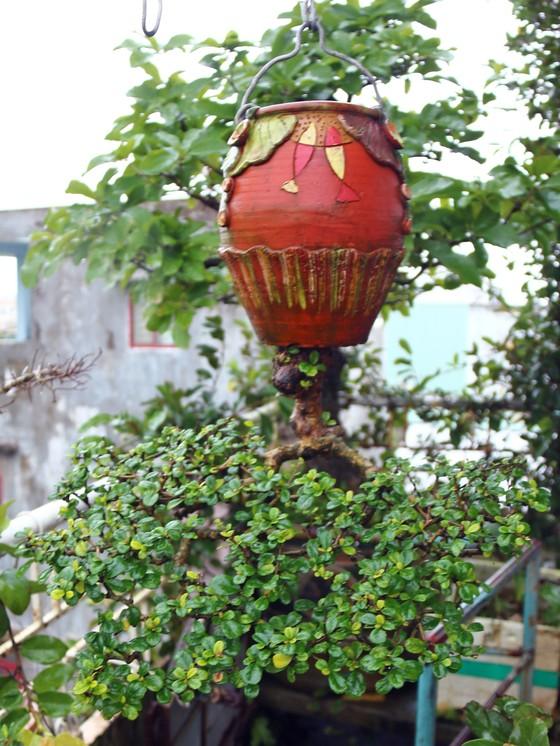 Khám phá vườn bonsai mọc ngược giữa phố ảnh 19