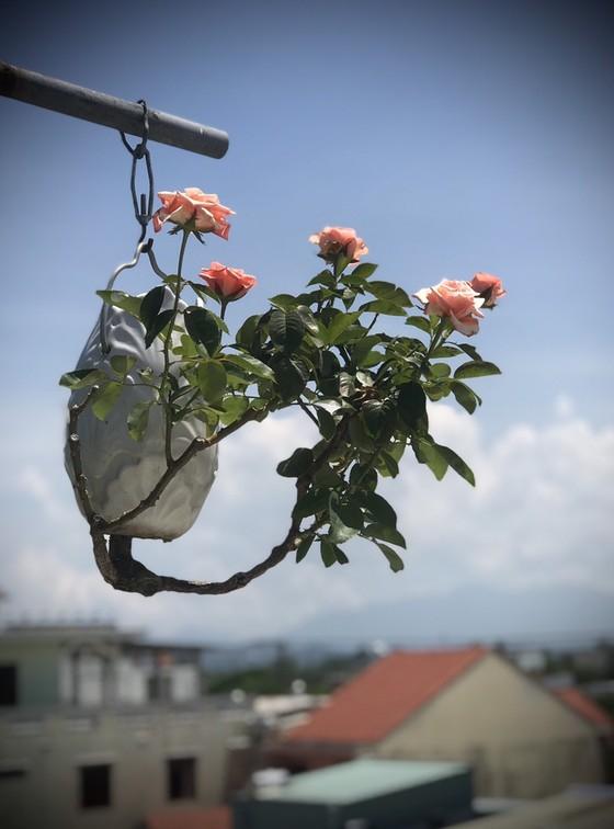 Khám phá vườn bonsai mọc ngược giữa phố ảnh 3