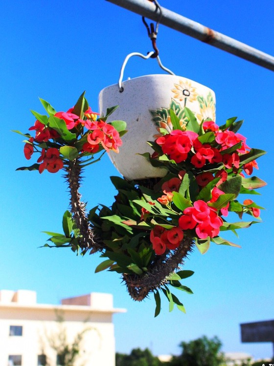 Khám phá vườn bonsai mọc ngược giữa phố ảnh 9
