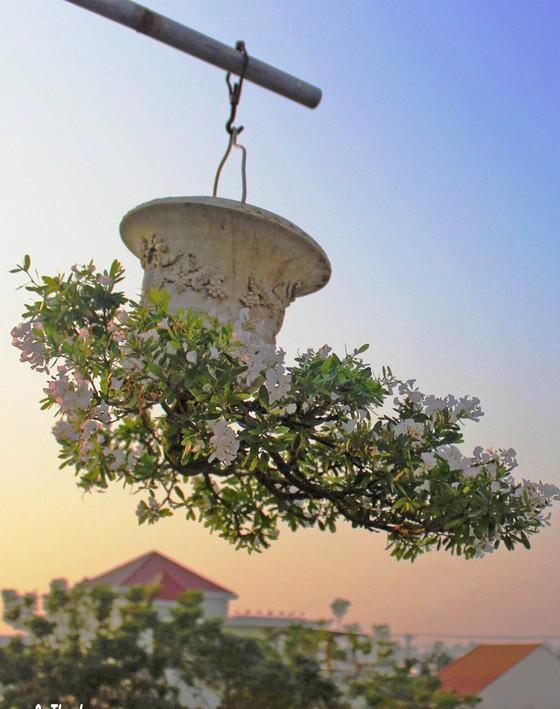 Khám phá vườn bonsai mọc ngược giữa phố ảnh 18