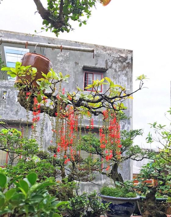 Khám phá vườn bonsai mọc ngược giữa phố ảnh 15