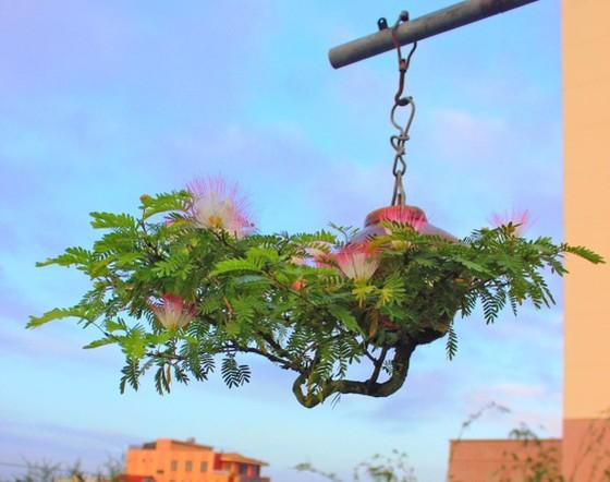 Khám phá vườn bonsai mọc ngược giữa phố ảnh 22