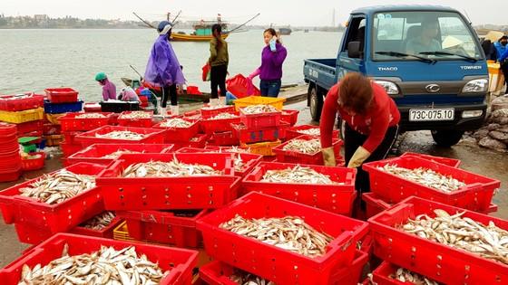Tiếp tục giám sát chặt Formosa và ổn định đời sống ngư dân ảnh 3