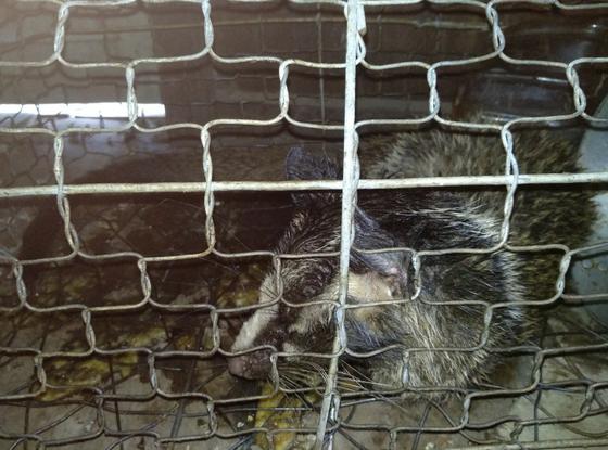 Trại nuôi động vật trái phép trong vùng đệm di sản Phong Nha ảnh 1