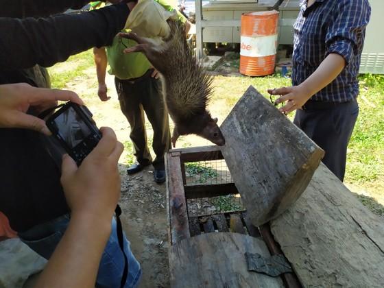 Quảng Bình: Tạm giữ nhiều động vật rừng nuôi trái phép ảnh 1