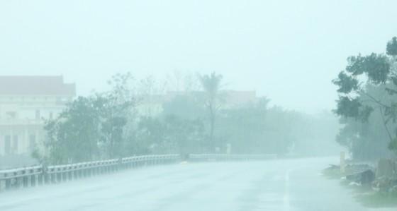 Quảng Bình mưa trắng trời, Huế cây cối ngã đổ ảnh 9