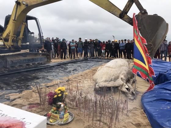 Xác cá voi dài 8m trôi dạt vào bờ biển Quảng Bình  ảnh 1