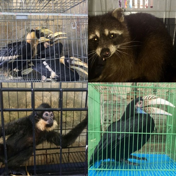 Các tỉnh miền trung đi đầu trong nỗ lực giảm thiểu vi phạm về động vật hoang dã ảnh 1