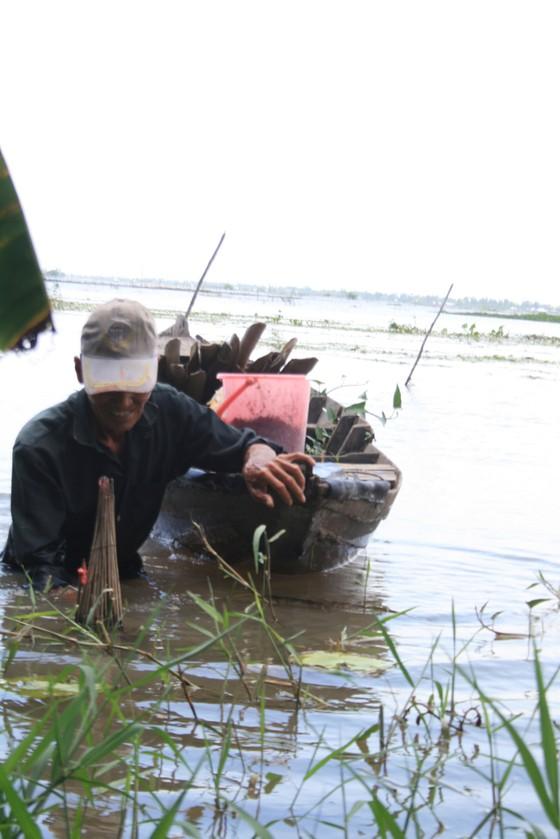 Nước bắt đầu lên, nông dân ĐBSCL ngóng mùa nước nổi ảnh 1