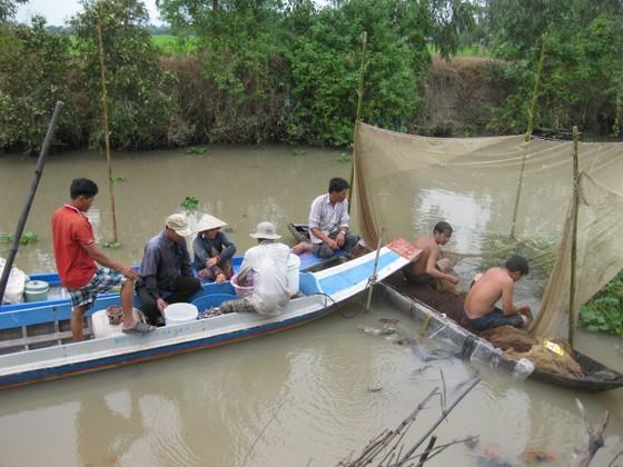 Đồng Tháp: Cấm khai thác thủy sản trong mùa sinh sản  ảnh 1