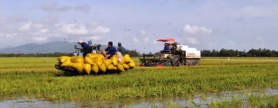 ĐBSCL: Chuyển hướng sản xuất theo kinh tế nông nghiệp ảnh 4