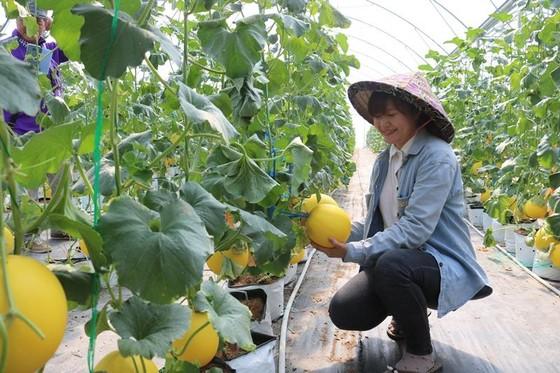 ĐBSCL: Chuyển hướng sản xuất theo kinh tế nông nghiệp ảnh 1