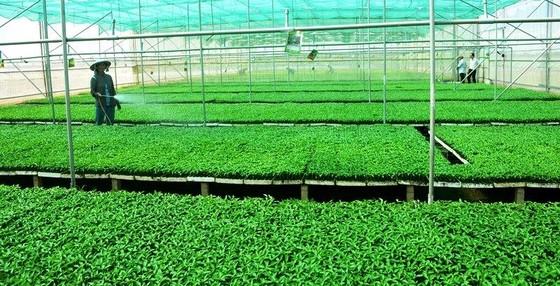 ĐBSCL: Chuyển hướng sản xuất theo kinh tế nông nghiệp ảnh 3