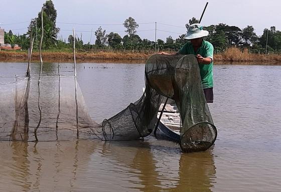 ĐBSCL: Nước lũ ở Tân Châu đã vượt báo động 1 ảnh 1