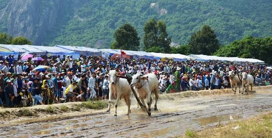 Hàng chục ngàn người xem đua bò Bảy Núi An Giang 2019 ảnh 3