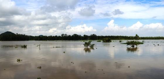 Xả lũ đập Trà Sư đưa nước vào vùng Tứ giác Long Xuyên ảnh 2