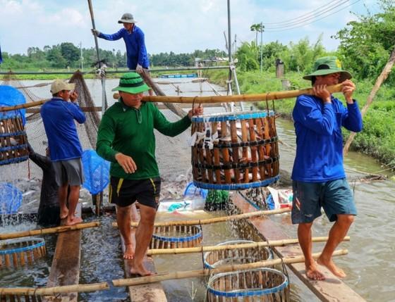 Chi hàng trăm tỷ đồng bù lỗ chênh lệch giá cá cho người nuôi ở ĐBSCL ảnh 1
