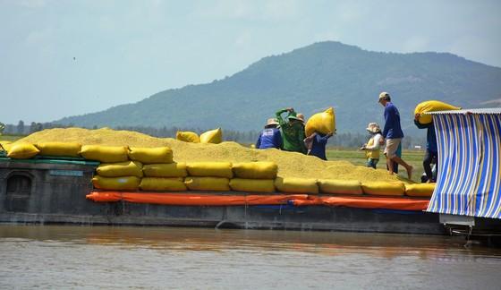 An Giang kiến nghị cho xuất khẩu 822.500 tấn nếp và gạo hạt tròn ảnh 1