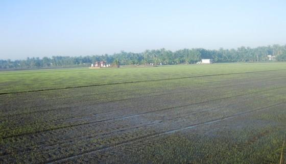 Hơn 22.554 hộ ở Tiền Giang được cấp nước ngọt cứu vườn cây ảnh 5