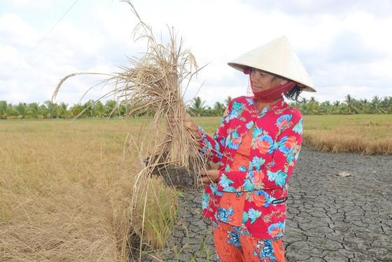 Hơn 22.554 hộ ở Tiền Giang được cấp nước ngọt cứu vườn cây ảnh 4