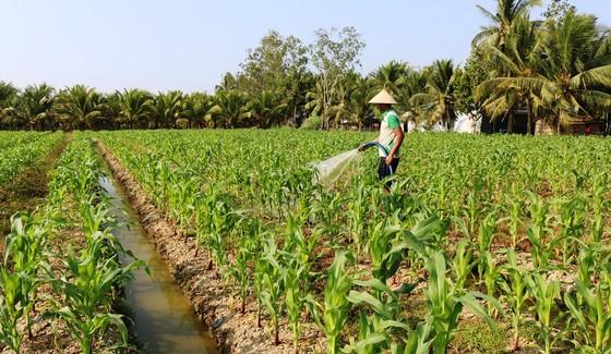 Tìm giải pháp phát triển bền vững cộng đồng Khmer Nam bộ  ảnh 3