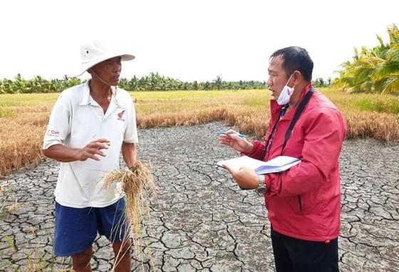 Hơn 58.000ha lúa ở ĐBSCL bị thiệt hại do hạn mặn ảnh 6