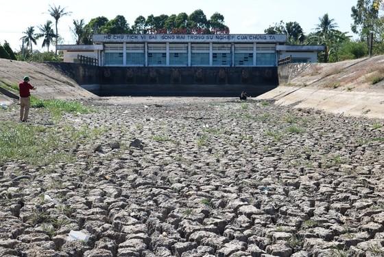 Hơn 58.000ha lúa ở ĐBSCL bị thiệt hại do hạn mặn ảnh 2