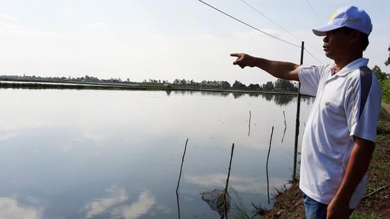Nuôi tôm tự phát gây thiệt hại đất lúa ở Kiên Giang  ảnh 1