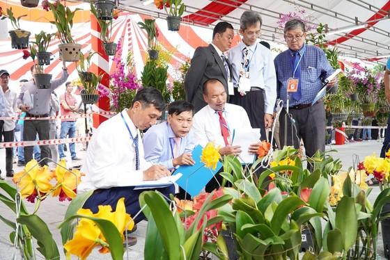 Hơn 800 nghệ nhân dự hội thi hoa phong lan toàn quốc  ảnh 2