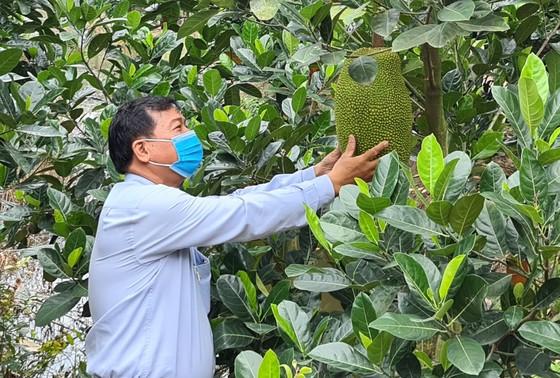 Nông dân thua lỗ vì nhiều loại trái cây rớt giá ảnh 1