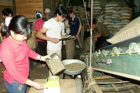 Cà phê Việt: Xuất khẩu nhiều, giá trị chẳng bao nhiêu ảnh 1